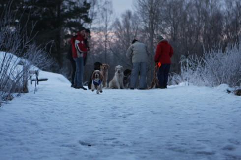 Vi gjorde ett fåfängt försök att samla alla hundar på en bild, för att göra en kollektiv inkallning...men det var hela tiden någon som rymde...