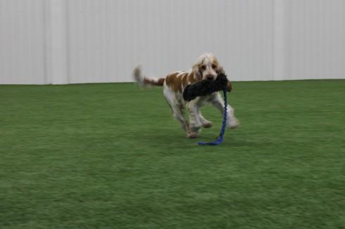 liten hund stor leksak