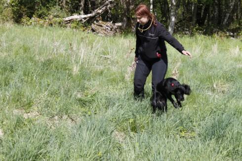 Kast med liten cocker? Nej, bara Emma som tog sig fram i det långa gräset genom att hoppa som en känguru.
