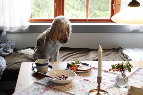 Jaha, detta är alltså dagens frukost?